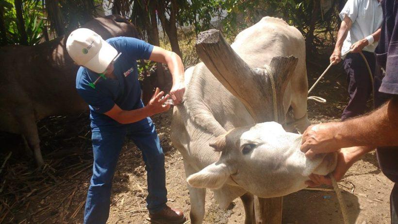 Rio Blanco invirtió más de 350 mil soles en sanidad animal – Huancabamba.